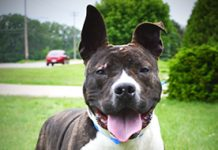 Rocky Forever Home
